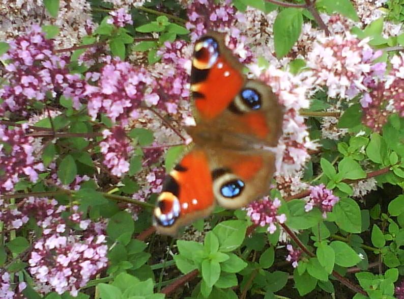 Wingwafe wie der Flügelschlag eines Schmetterlings